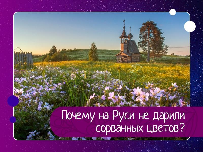 Почему на Руси не дарили сорванных цветов?